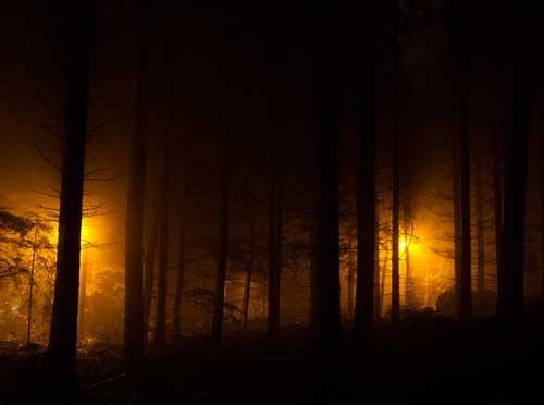 Luces en el bosque