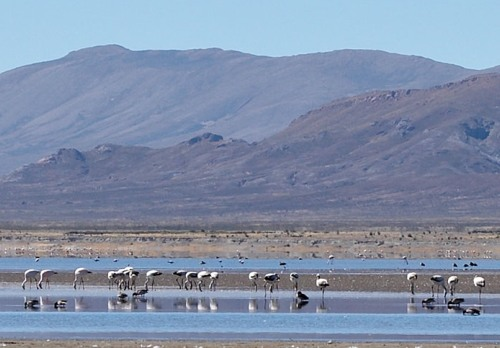 Laguna de los Pozuelos, el reino de las aves