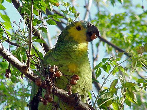 Parque Nacional Copo, vida en Santiago del Estero