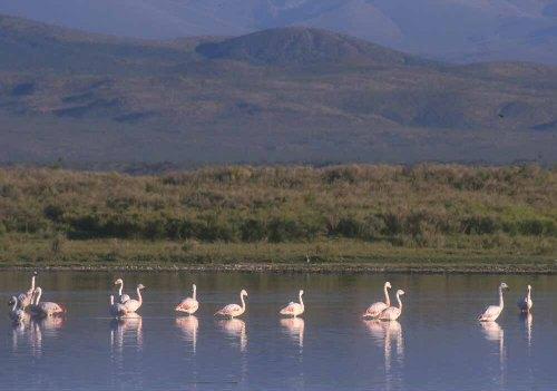 La Laguna de Llancanelo y el Parque del Ayer
