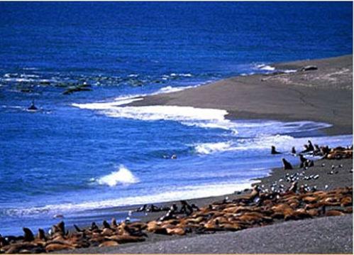El espectáculo de las ballenas en Península Valdes