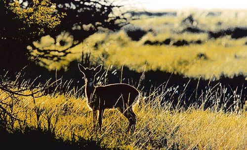 Reserva Natural Campos del Tuyú