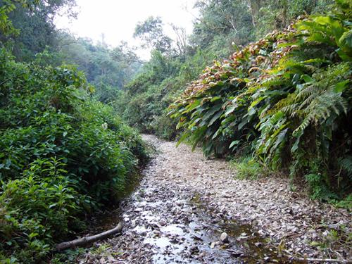 Parque Nacional Baritú, selva tropical en Salta