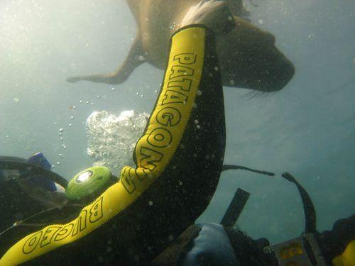 buceo lobos marinos