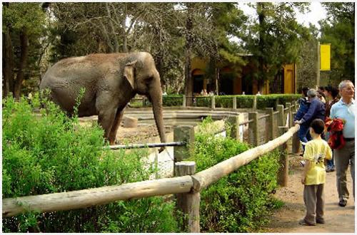 El Zoologico de Cordoba, la naturaleza a nuestro alcance