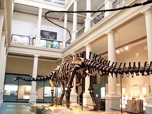 Museo de Ciencias Naturales de La Plata