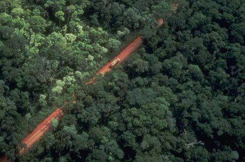 selva Misiones