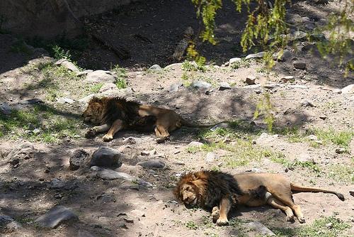zoo mendoza