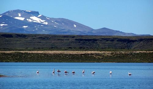 El Parque Nacional Laguna Blanca, en Neuquén