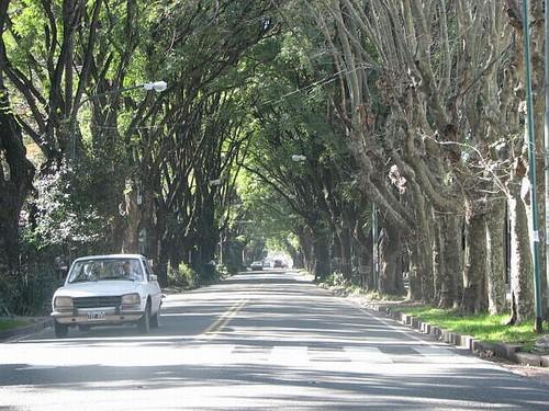 La historia del barrio de Olivos